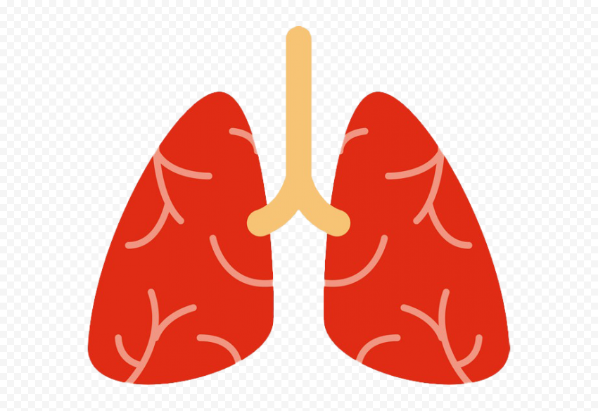 Cartoon Lung Lungs Clipart Respiratory System Icon