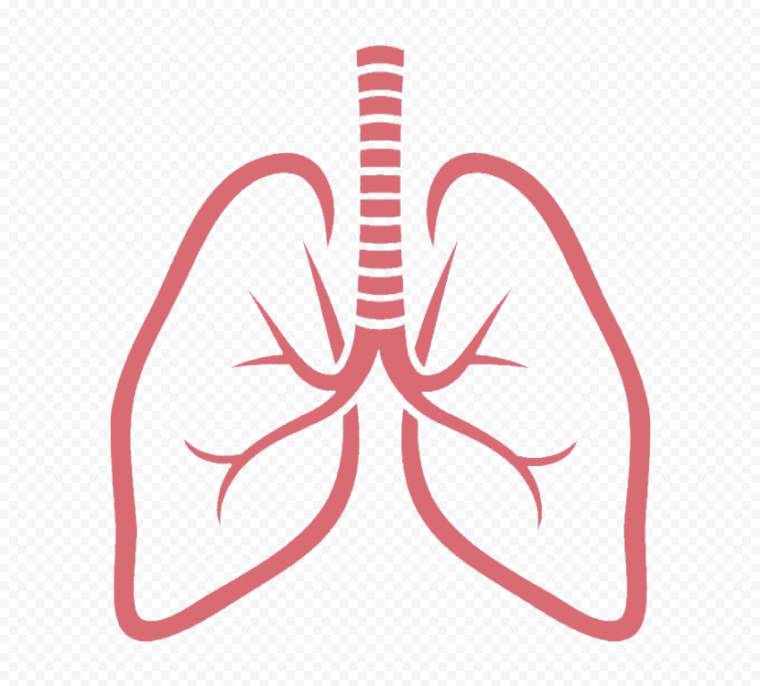 Outline Lungs Vector Respiratory System Icon