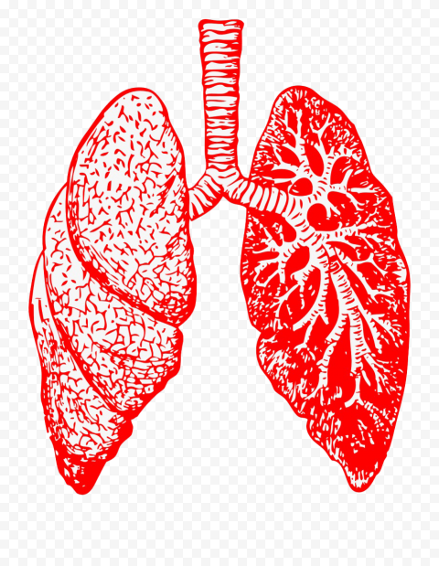Red Drawing Lung Respiratory System Lungs Pic Icon