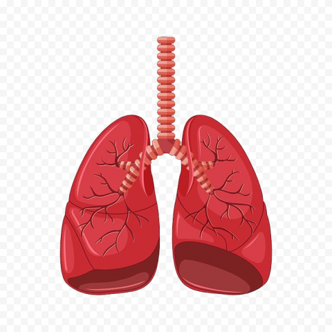 Animated Lungs Cartoon Clipart Illustration Icon