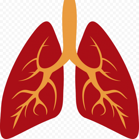 Cartoon Lungs Lung Bronchus Illustration Clipart