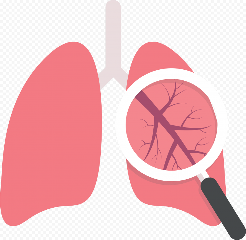 Lung Lungs Respiratory System Magnifier Flat Icon