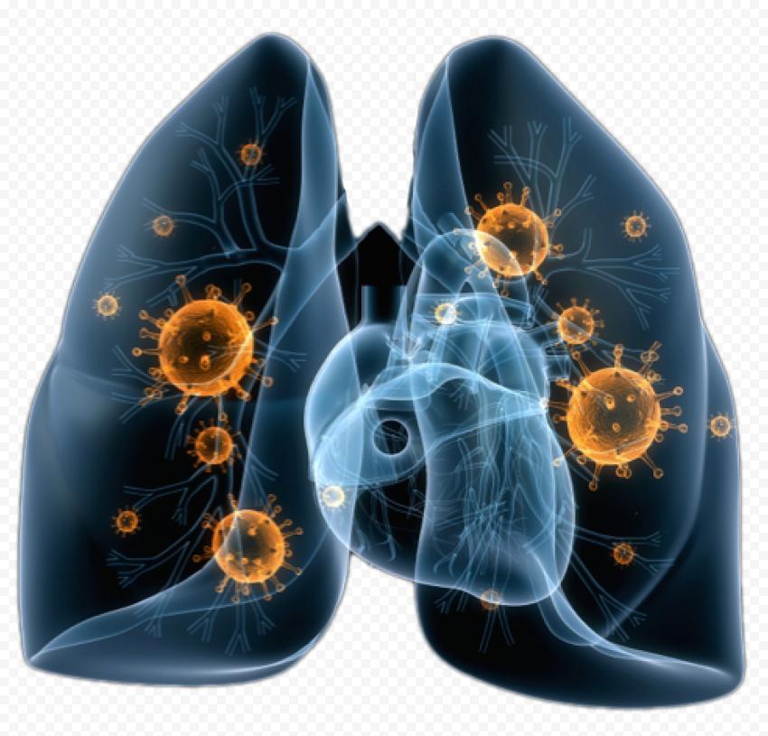 Lungs Lung Coronavirus Covid19 Corona Illustration