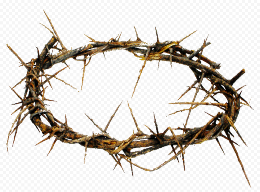 Real Branch Crown Of Thorn Jesus Christianity