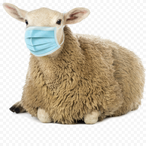 Wooly Sheep Sitting Wear Surgical Mask