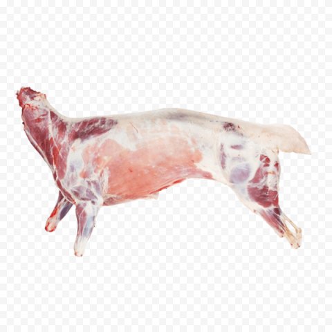 Whole Sheep Lamb Mutton Goat Meat Food