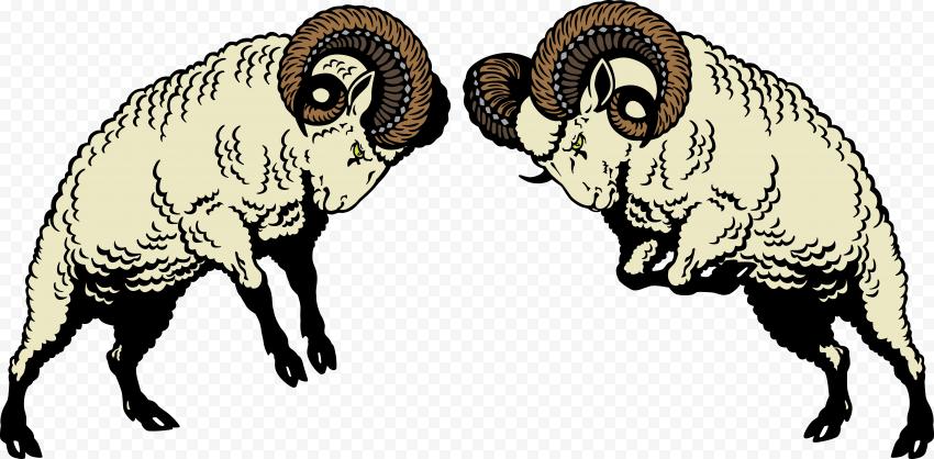 Two Wooly Sheep Ram Logo Fighting