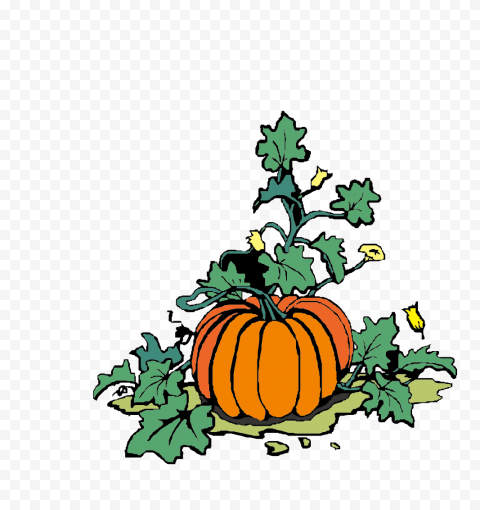 Vector Pumpkin With Green Leaves