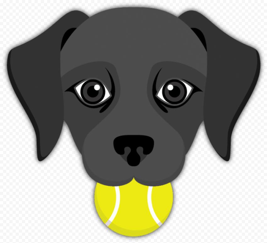 Black Labrador tennis ball mouth