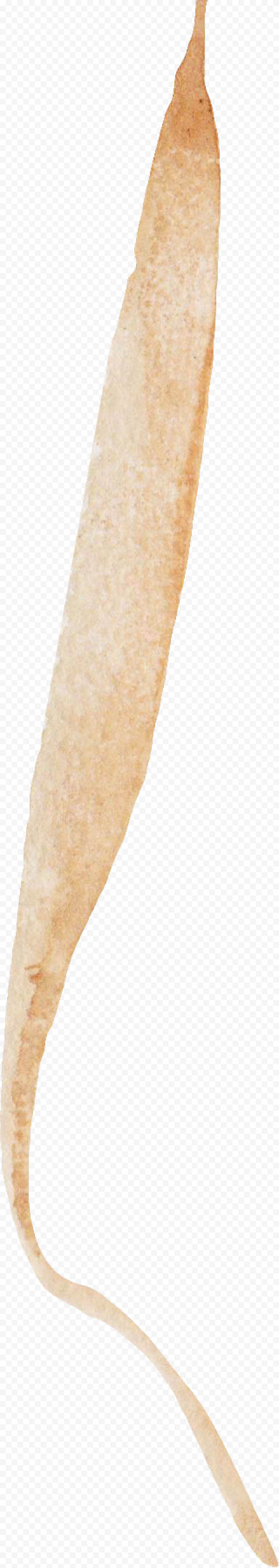 Brown Nature Cereal wheat png watercolor