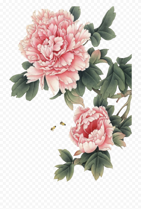 Chinese Pink Flower Illustration