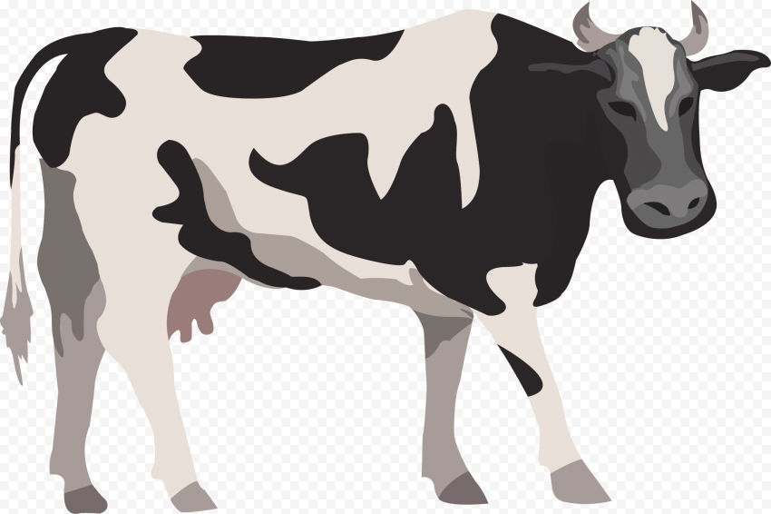 HD Vector Cattle Cartoon Cow PNG