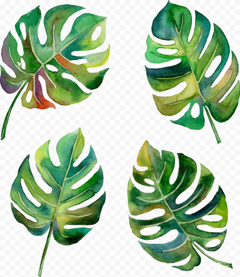 Leaf Swiss cheese plant Green Watercolor