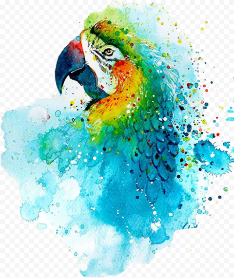 Parrot Bird Painting Watercolor