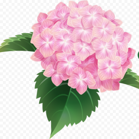 Pink Hydrangea Bouquet Flower Illustration