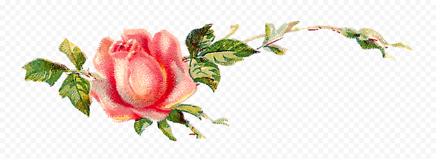 Romantic Pink Flower Canvas Effect Watercolor